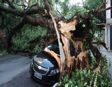 Queda de árvores. Quando o seguro vai proteger seu carro