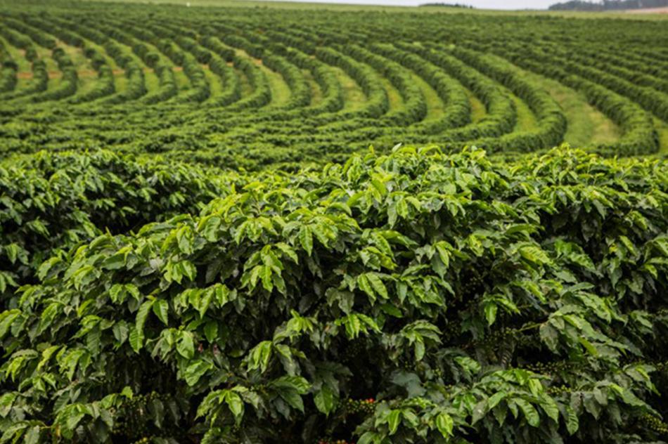 Seguro Rural como ferramenta no setor cafeeiro é destaque na SIC