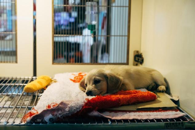 Seguros Unimed lança Seguro Empresarial para Pet Shop