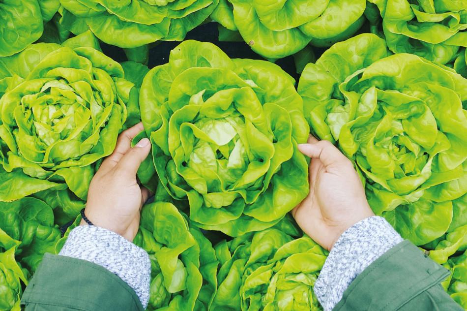 Seguro para agronegócios garante proteção para pequenos, médios e grandes produtores