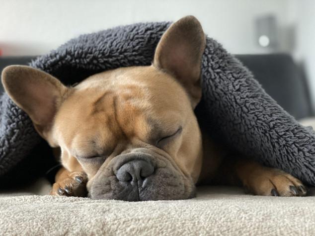 Como proteger os pets com a chegada dos dias mais frios